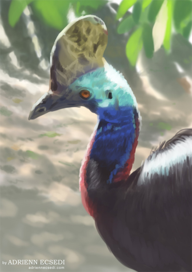 Southern Cassowary portrait