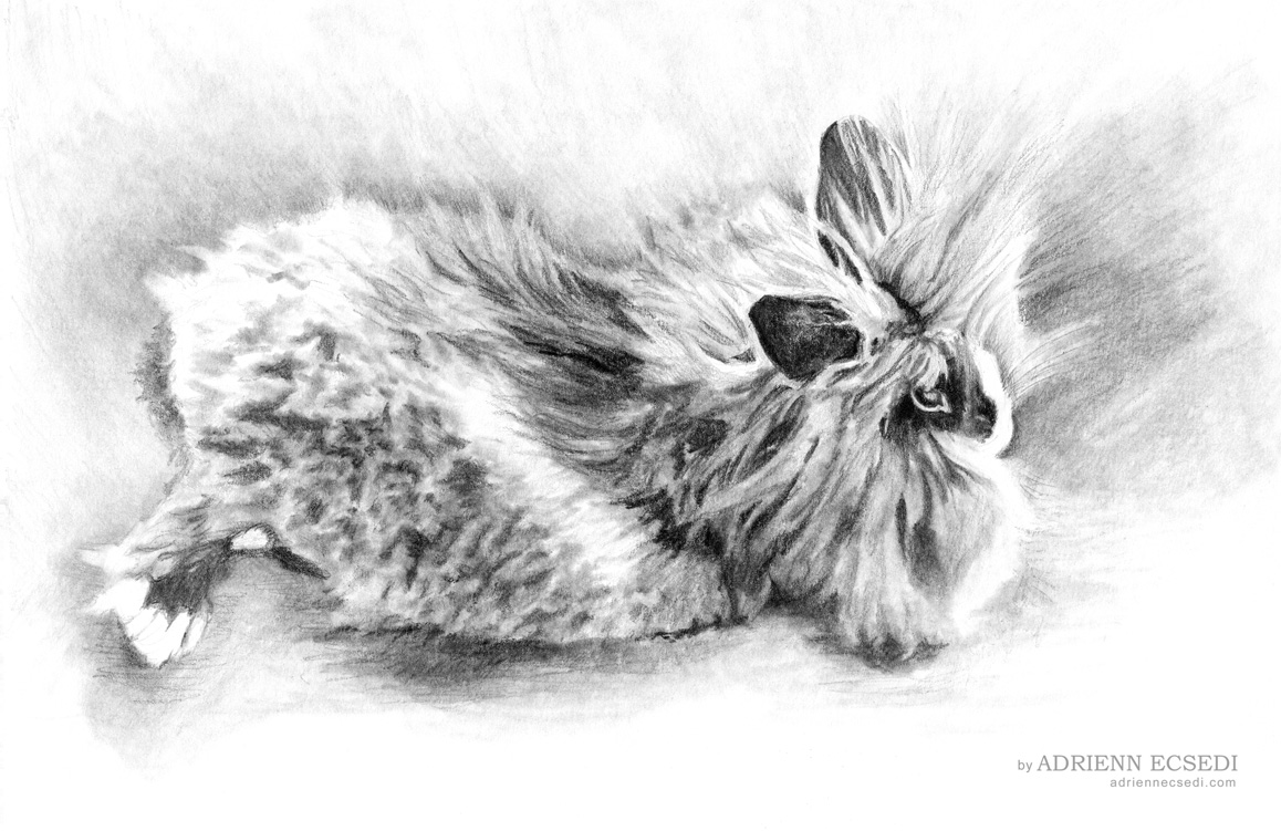 Fluffy bunny pencil drawing